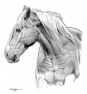 Drawing - Da134 One Horse Daniel Adams  by Daniel  Adams