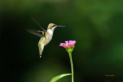One Hummingbird Art Print