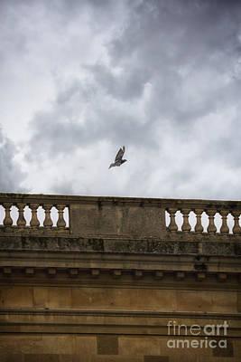 One In Flight Original by Margie Hurwich