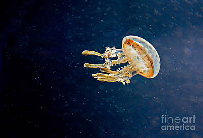 One Jelly Fish Art Prints Art Print