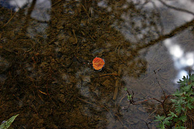 Art Print featuring the photograph One Leaf by Jeremy Rhoades