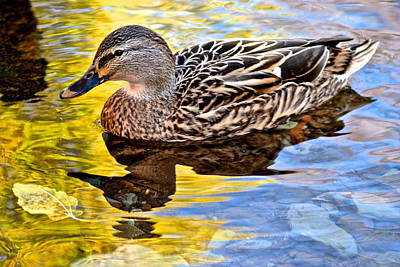 Photograph - One Leaf Two Ducks by Frozen in Time Fine Art Photography