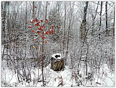 Photograph - One Lone Log by Dianne  Lacourciere