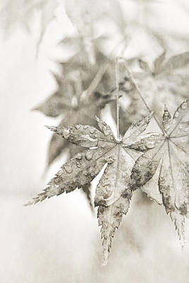 Maple Leaf Art Photograph - One Misty Moisty Morning by Caitlyn  Grasso