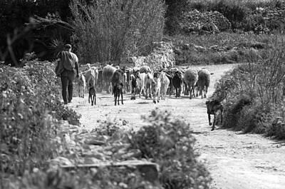 One Of The Last Gozitan Traditional Sheep Farmers  Art Print