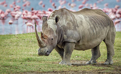 Rhino Photograph - One Of The Last by Jeffrey C. Sink