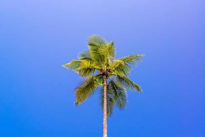 One Palm Tree Art Print by Jess Kraft