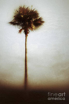 Photograph - One Palm Tree-no1 by Darla Wood