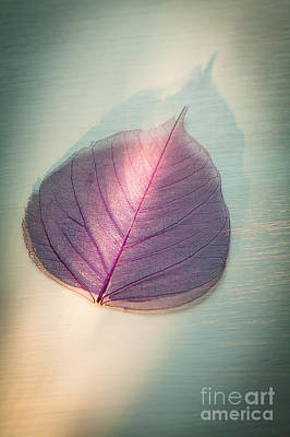 Photograph - One Purple Leaf by Jan Bickerton
