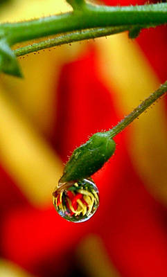 Photograph - One Raindrop by Rona Black