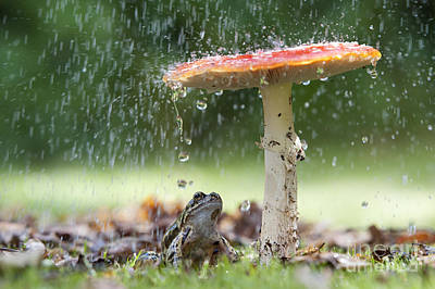 Toadstools Photograph - One Rainy Day by Tim Gainey