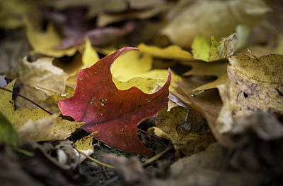 Photograph - One Red Leaf by Sara Hudock