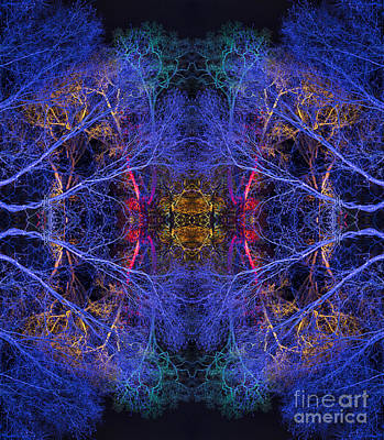 Enlightenment Wall Art - Photograph - One by Tim Gainey