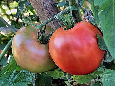 Photograph - One Tomato Two Tomato  by Janice Drew