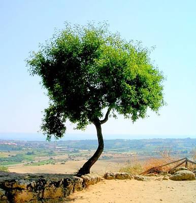 Photograph - One Tree by Caroline Stella
