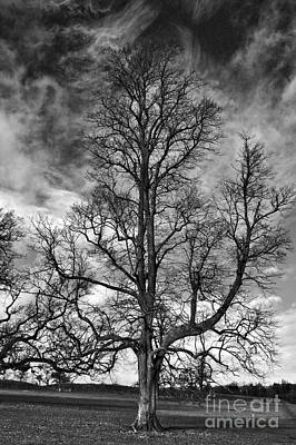 Photograph - One Tree by Jeremy Hayden