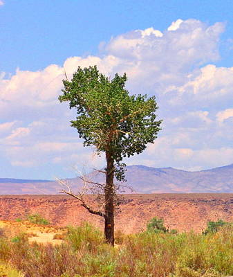 Art Print featuring the photograph One Tree by Marilyn Diaz
