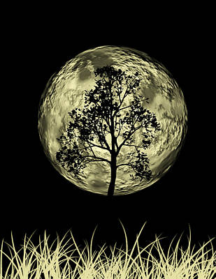 Moon Drawing Photograph - One Tree  by Mark Ashkenazi