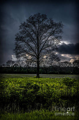 Photograph - One Tree by Ronald Grogan