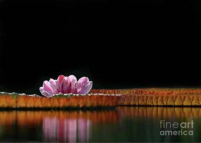 Photograph - One Water Lily by Sabrina L Ryan