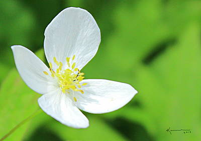 Photograph - One White Flower by Kume Bryant