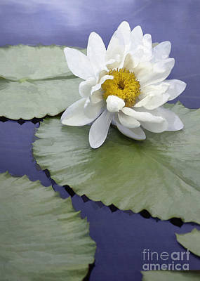 Photograph - One White Lily by Sharon Foster