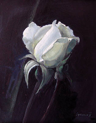 Painting - One White Rose by Synnove Pettersen
