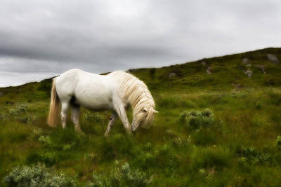 Photograph - One Whitehorse by June Jacobsen