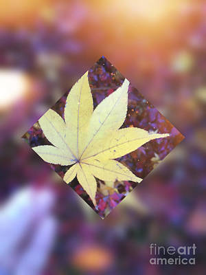 Abstruse Digital Art - One Yellow Maple Leaf by Beverly Claire Kaiya