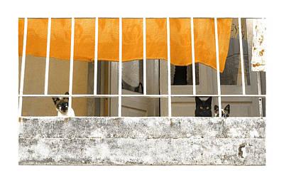 Photograph - One Yellow Two Blue by Menega Sabidussi