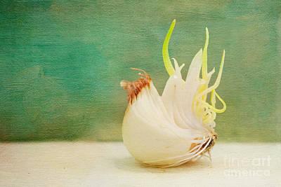 Onion Bird Art Print by Kay Pickens