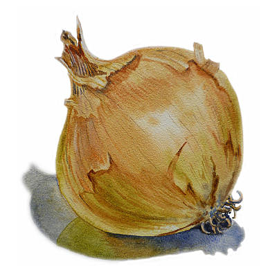 Vegetables Painting - Onion by Irina Sztukowski