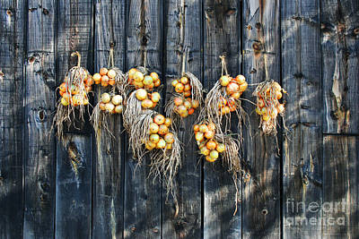 Photograph - Onions And Barnboard by Barbara McMahon
