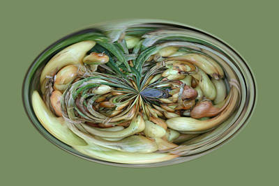 Photograph - Onions by Jim Baker