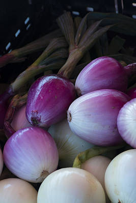 Photograph - Onions by Philip Rispin