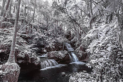 Photograph - Onomea Falls In Infrared 1 by Jason Chu