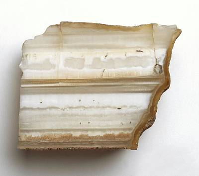Opal Photograph - Onyx With White Opal by Dorling Kindersley/uig