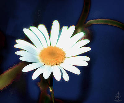 Photograph - Oops A Daisy by Pennie  McCracken