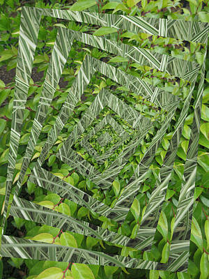 Photograph - Op Art Garden 1 by Alison Stein