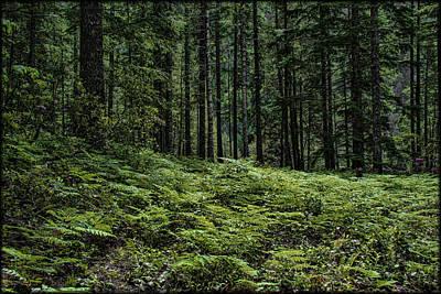 Photograph - Opal Creek Wilderness by Erika Fawcett
