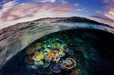Coral Photograph - Opal Reef Off The Great Barrier Reef by David Doubilet