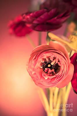Ranunculus Flower Photograph - Open Heart by Jan Bickerton