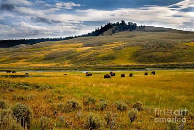 Photograph - Open Range by Robert Bales