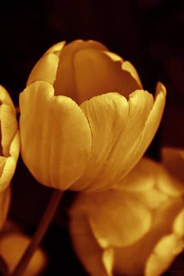 Photograph - Opening Tulip Flower Golden Monochrome by Jennie Marie Schell