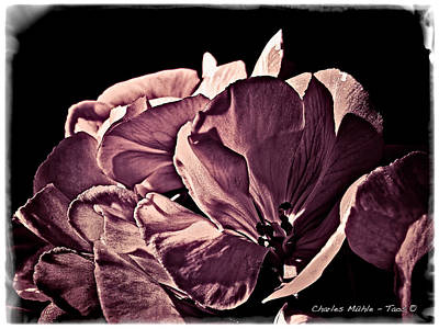 Photograph - Opera Mauve by Charles Muhle