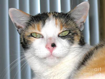 Photograph - Opie The Calico Cat by Oksana Semenchenko