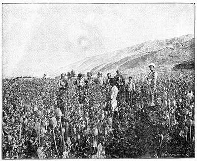 1898 Photograph - Opium Farming In Persia by Science Photo Library