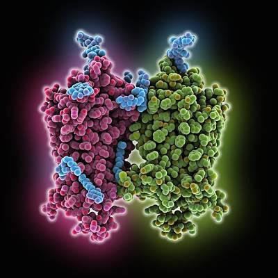 Opsin Molecule Art Print