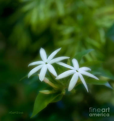 Photograph - Optimistic Jasmine Friend To The Soul by Michelle Constantine