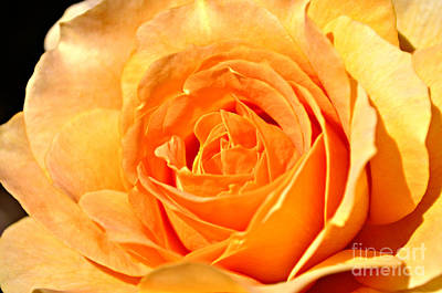 Photograph - Optimistic Rose by Mindy Bench